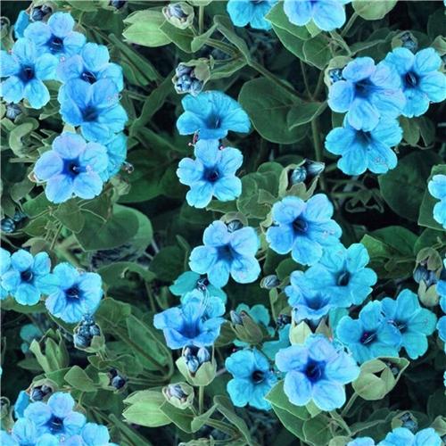 Digitaltryck - Blåa Blommor - Trikå - Symaskinsexperten e53835d58ee6d